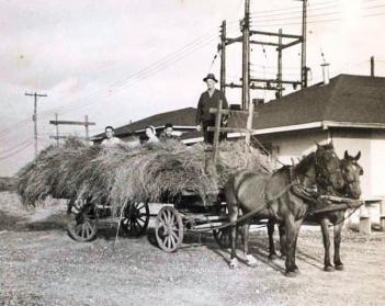 Camp X Training - hiding in hay wagon 1943